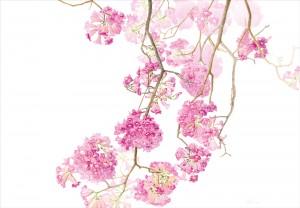 Margherita Leoni • Flora, Spring Goddess