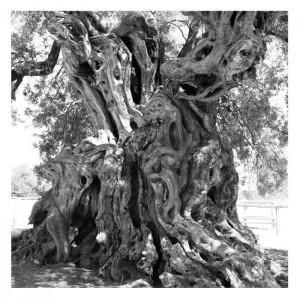 Tiziano Fratus • Arborgrammaticus